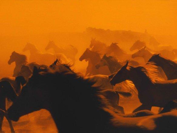 Estampida de caballos